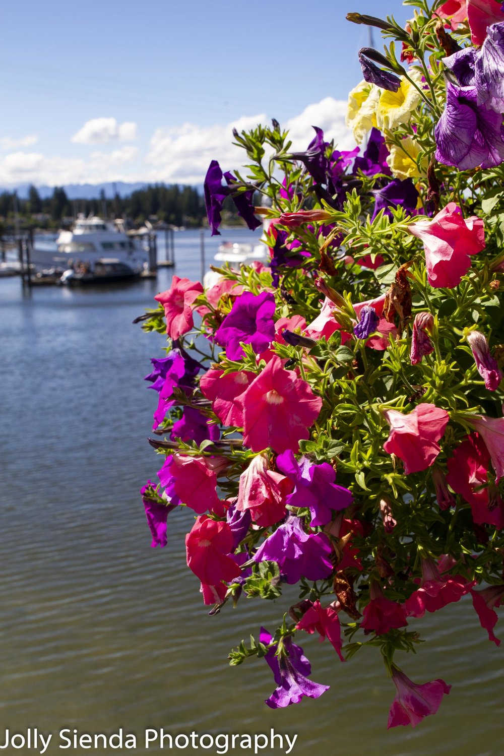 Hanging Petunia flower basket at the seashore