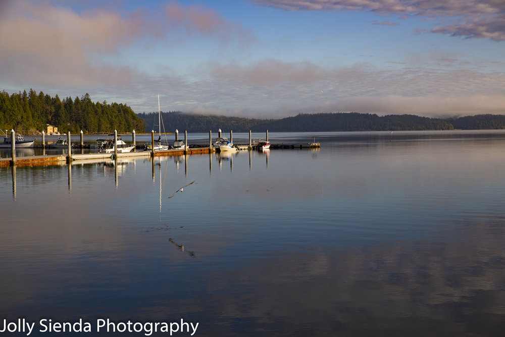 Seagull flies over the pastel cloud reflection and the marina on Hood Canal