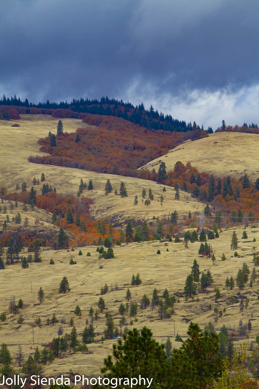 Patch of blazing Autumn deciduous on a plateau