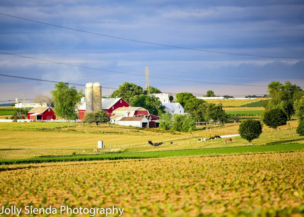 Red Barns, Silos, Cows, and Green Pastures on Amish Farmland