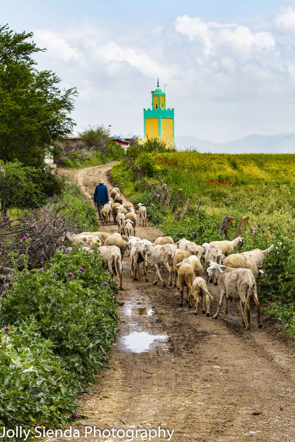 Shepherd leads a herd of goats to the mosque