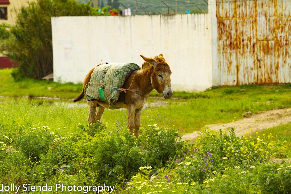 Donkey wears a blanket standing next to wildflowers