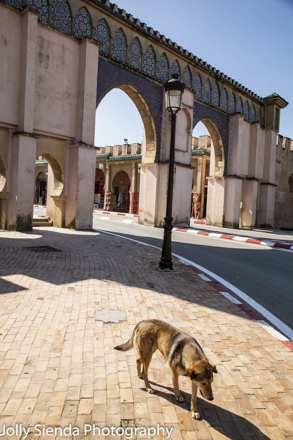 Meknes Imperial Gate and a dog