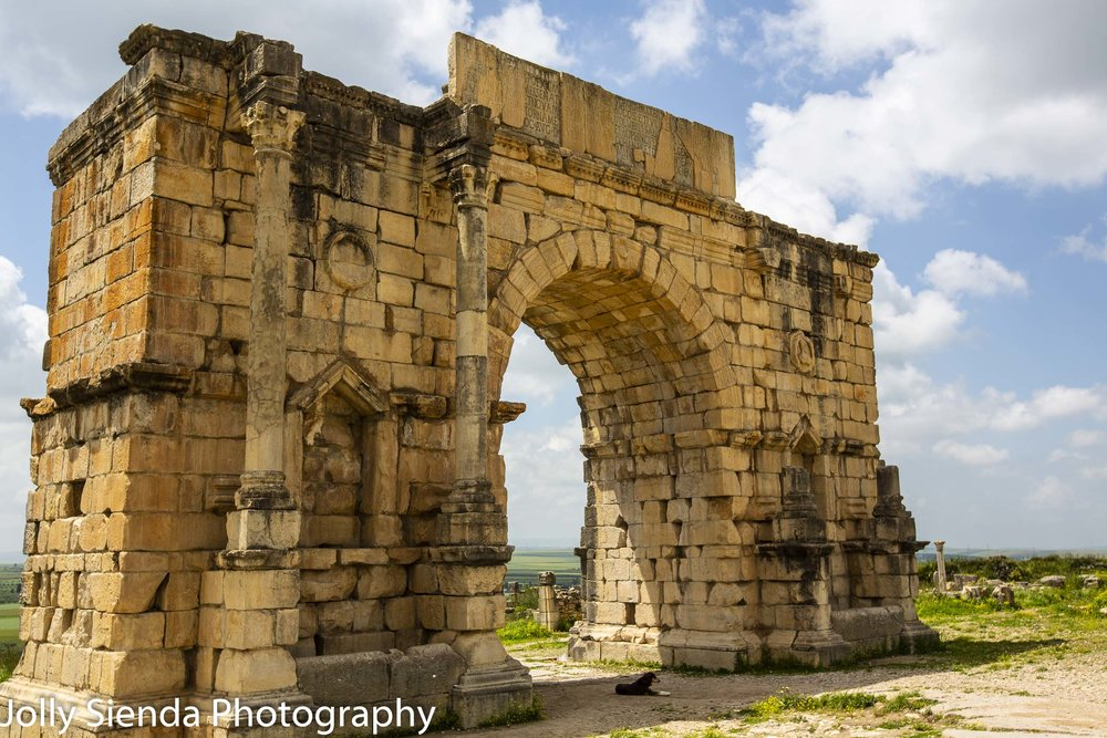 Arch of Caracalla (Triumphal Arch) and a dog