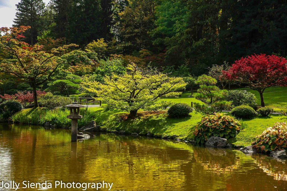 Shades of autumn color at the Seattle Japanese Garden