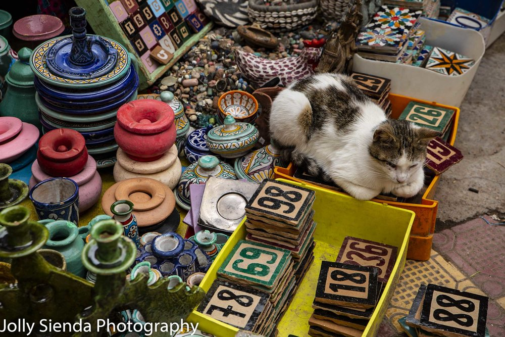 Calico cat sits on ceramic tiles and pottery