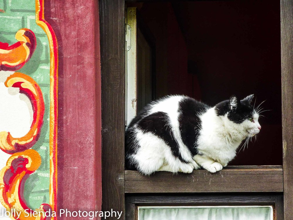 Black and White Tuxedo Cat sits on a window ledge of a painted O
