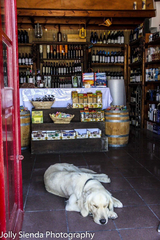 Sleeping dog lies on tile floor in a shop with a red door