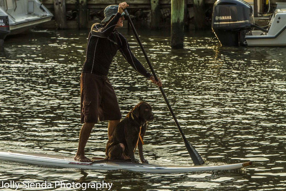Paddle Boarder and his dog on paddle on Shem Creek