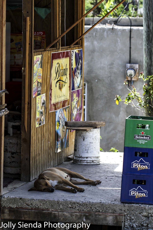 Female dog sleeps outside at a bar