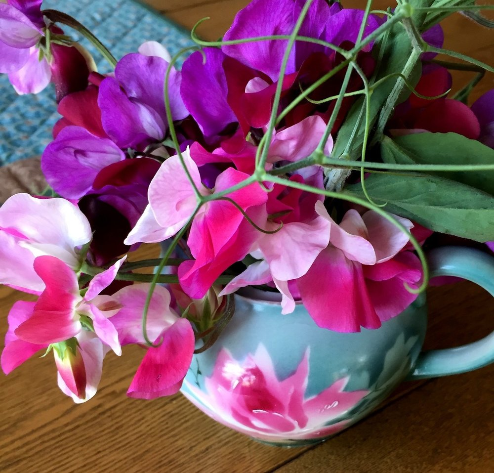 My intensely fragrant, bi-color sweet peas that climb a trellis in my vegetable garden. Flowers attract beneficial insects that help with pest control.   Read my earlier post,   Grow Flowers to Attract Beneficial Insects to Your Vegetable Garden    Happy I saved this little lidless teapot from my grandmother's things.