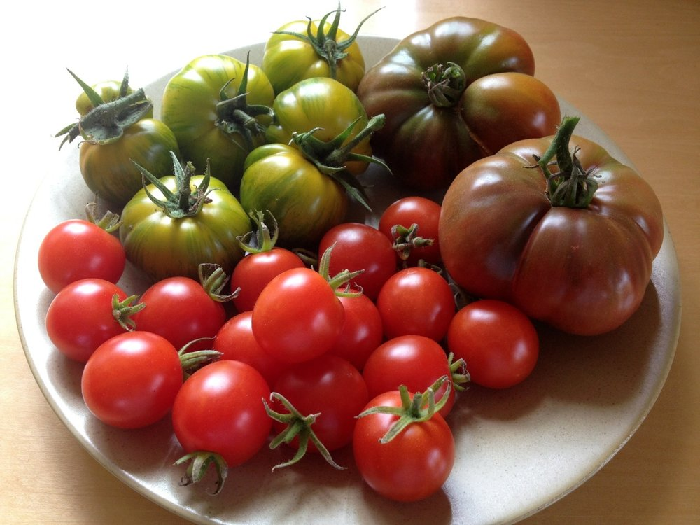 """It's difficult to think anything but pleasant thoughts while eating a homegrown tomato.""     Lewis Grizzard"
