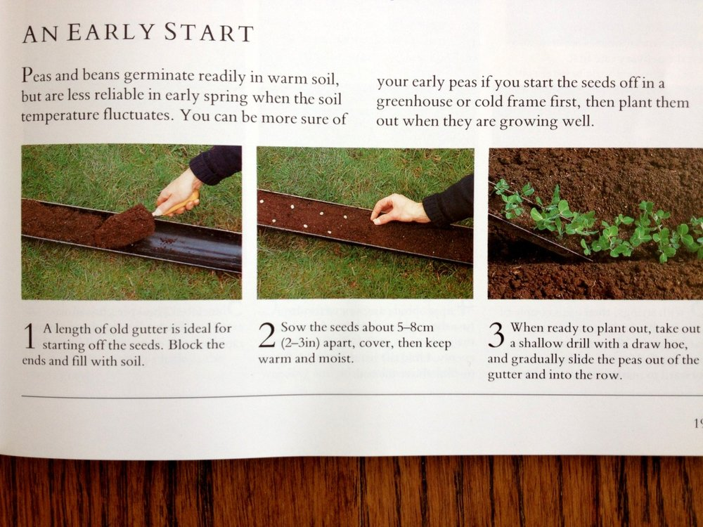 Thinking of all my eastern gardening friends who probably didn't get their peas in by St. Patrick's Day. The photo above is from a British kitchen garden book.