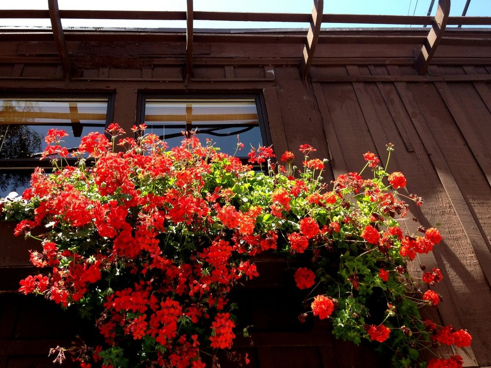September 13, 2013    Bi-coastal moment:  Point Loma or Cape Cod?    Red Geraniums     Geraniums…crimson spheres   Attached to broadleaf greenery    Red sizzles with jubilant cheers   Stealing attention from the scenery          Theresa Ann Moore