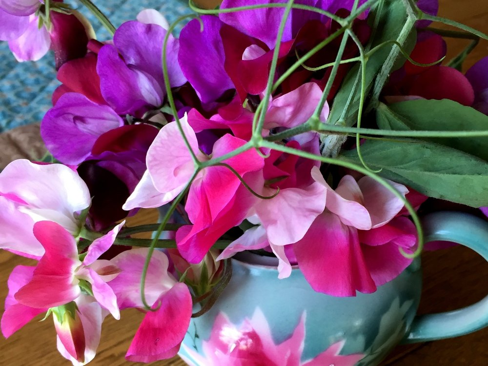 EG Sweet peas in teapot 4-3-17 copy.jpg