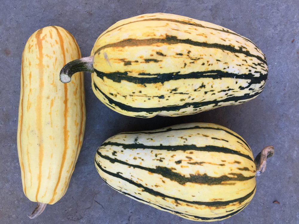 Delicata squash harvested a few weeks ago.