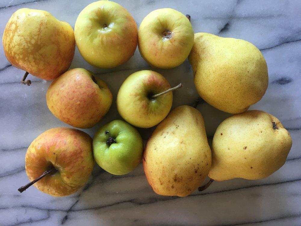 'Dorsett Golden' apples from my tree and Bartlett pears