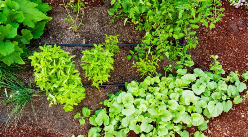 2-one-day-garden-watch-it-grow-0412-1118-900x500-800x0-c-default.jpg