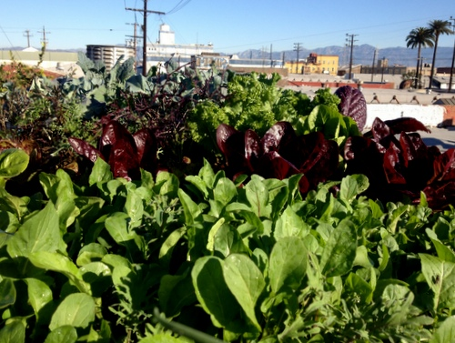 Tim's garden in 2015, Arts District, Downtown LA
