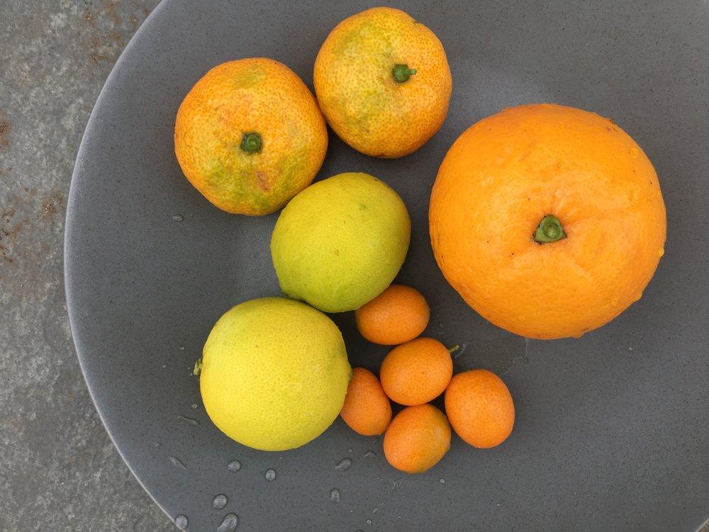Tangerines, limes, kumquats and an orange