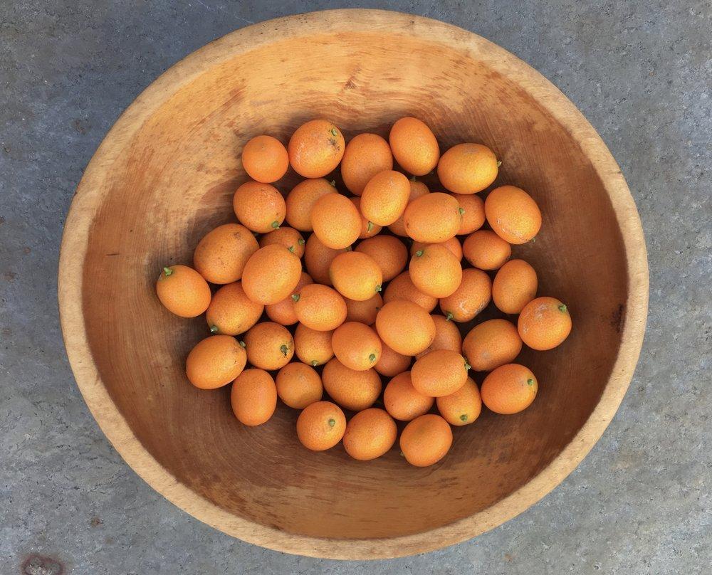 Nagami kumquats