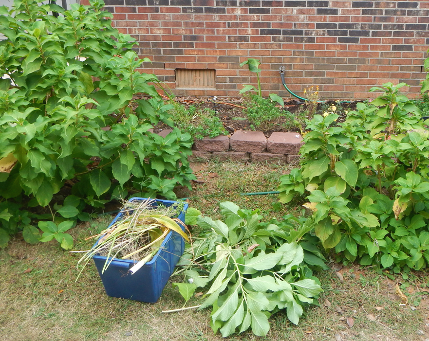 Clean out the garden and clear out debris