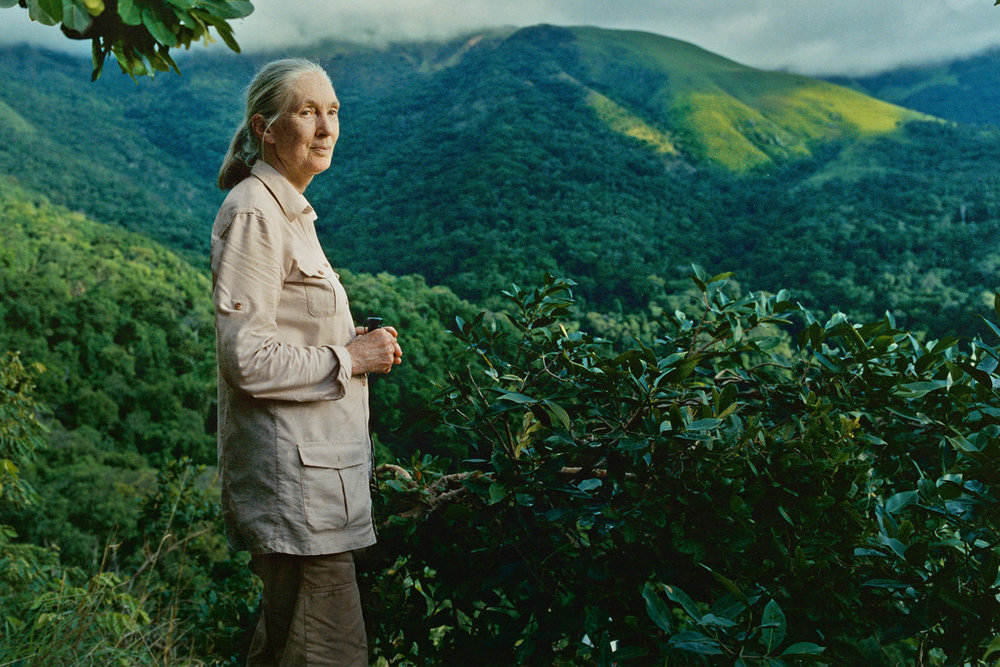 Google - Walk in the footsteps of Jane Goodall