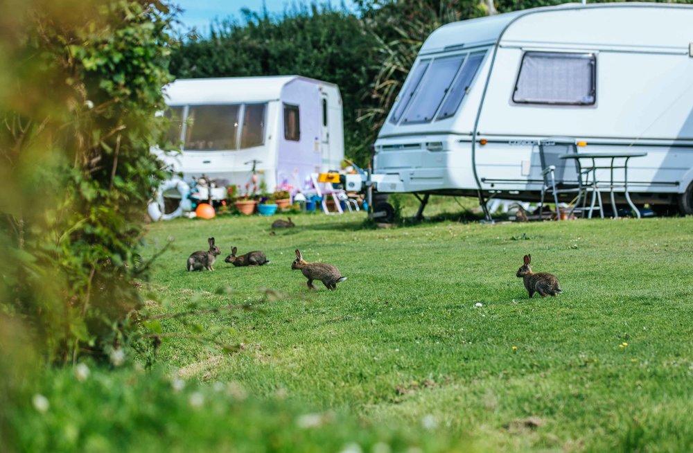 Little Meadow Campsite web-17.jpg