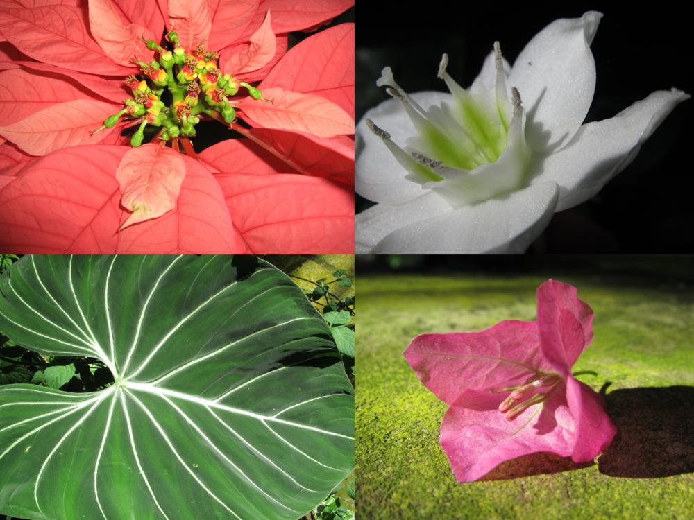 FW botanic garden conservtory.png