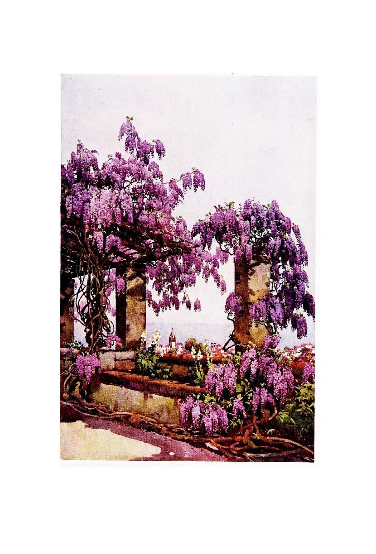 2012 10 i487 k wistaria santa luzia.jpg