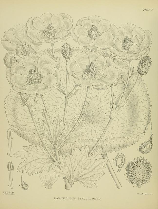 2011 illustrationsofn01chee_0026 large.jpg