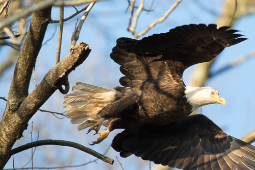 2018-03-18-Conowingo Eagles-020.jpg