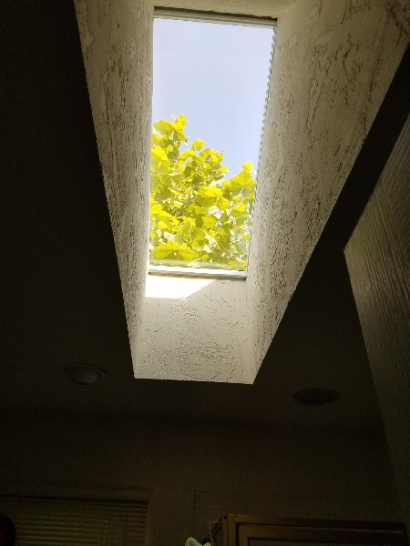- I've also discovered that the tree is visible from the skylight. There is a lot to like about a house that is almost 30 years old! I am savoring being home along!