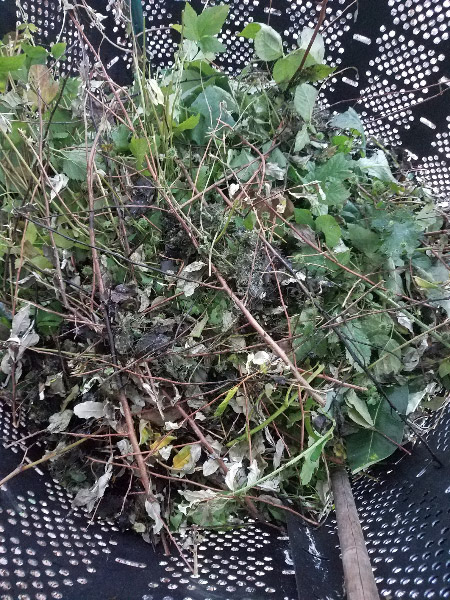 - I filled a trash can full of 'greens' to take to the compost pile; I also had some paper shreds and veggie scraps from the kitchen to add. I took the pitchfork to punch the material down and turn it over. The compost in the bottom is already looking 'done.'