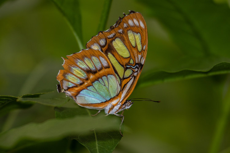 g 2018-07-30-Brookside butterflies-110.jpg