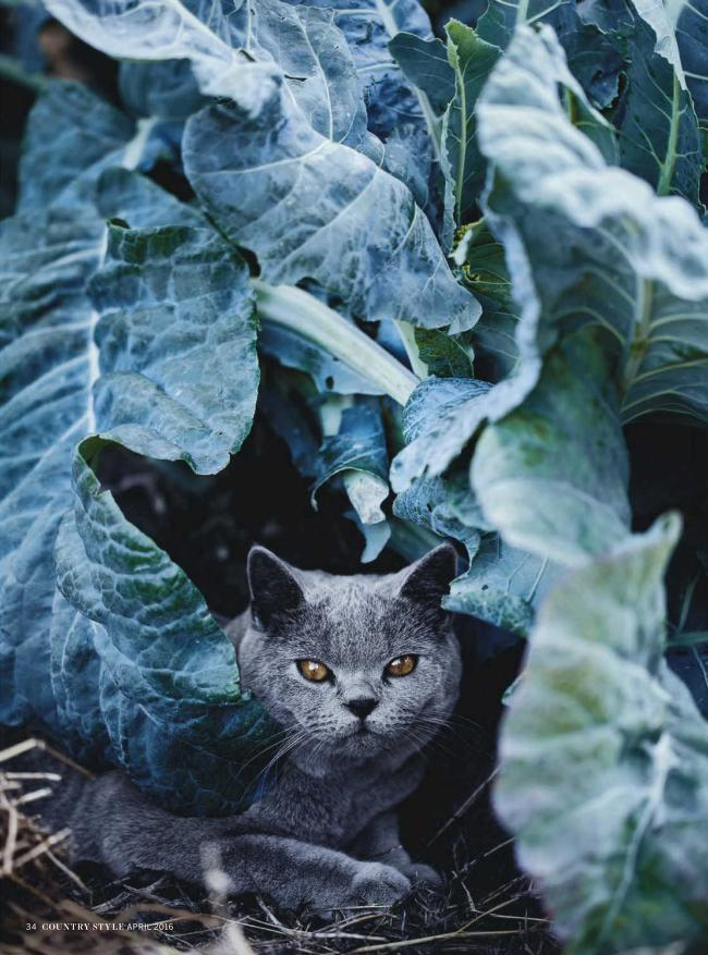 - Carey, Victoria (editor). Country Style: Australia Coast to Coast. Several issues of the magazine (2015 and 2016 vintage) are available from Internet Archive here. I liked the photographs of gardens and houses….and animals. They have a large ad for Fancy Feast cat food in every issue!