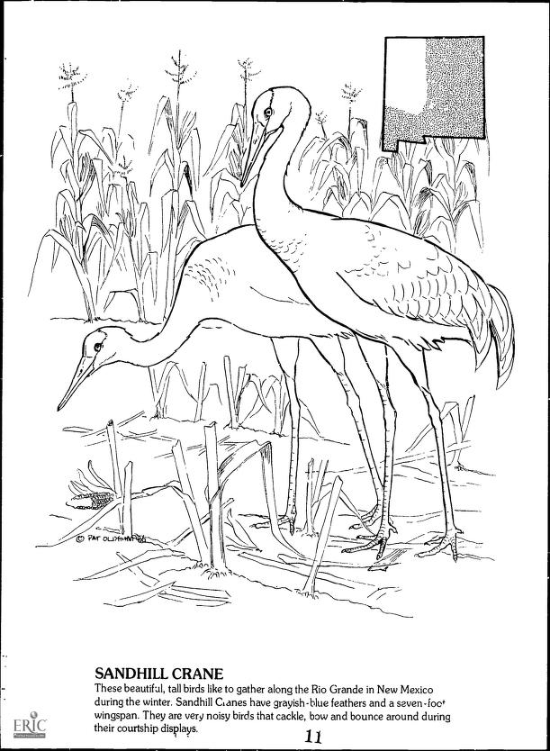 - ERIC. Wildlife of New Mexico: A Coloring Book. 1986. Available from Internet Archive here. There are 31 animals pictured along with a map of their range when the book was published in the 1980s. The javelina must have expanded its range since it is now seen in the refuge which in south central New Mexico. But the highlight of the festival – always – is the sandhill cranes.