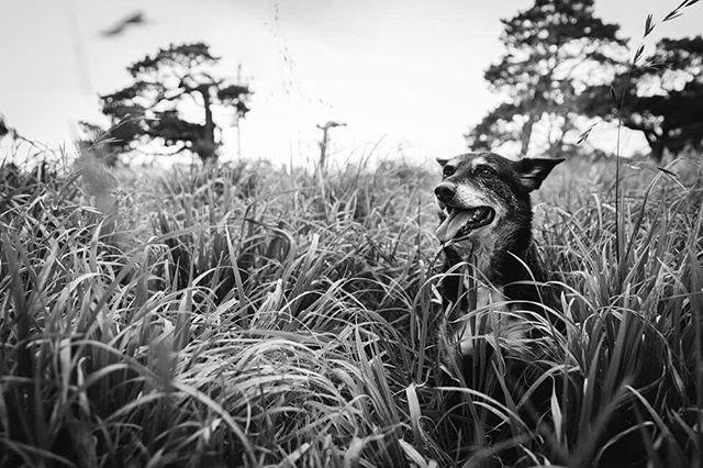 Our Freddie  #laurenmcadamphotography #dogsofinstagram #geelongfamilyphotographer #documentaryphotography #madeingtown #familyphotography  #momtog #documentyourdays #inbeautyandchaos #farmdog  #inhomephotography #clickinmoms