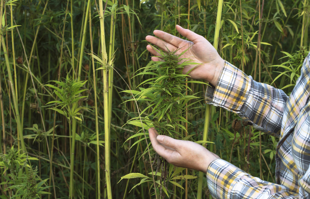 Frequently Asked Questions About Hemp -