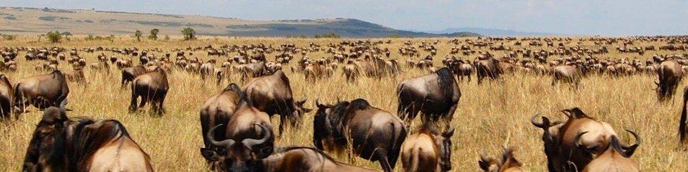 Maasai Mara Safari Yvette Jong .jpg
