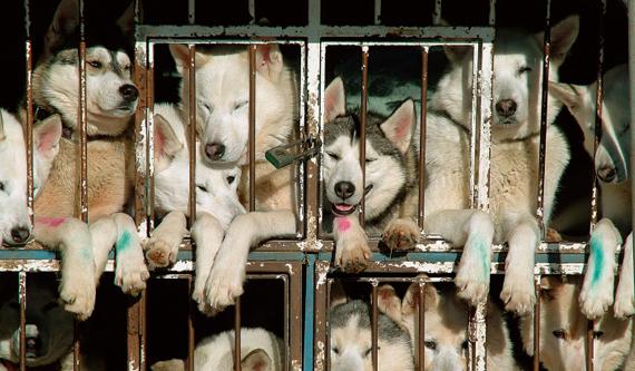 news_09.15.17_california_dog_ban.jpg