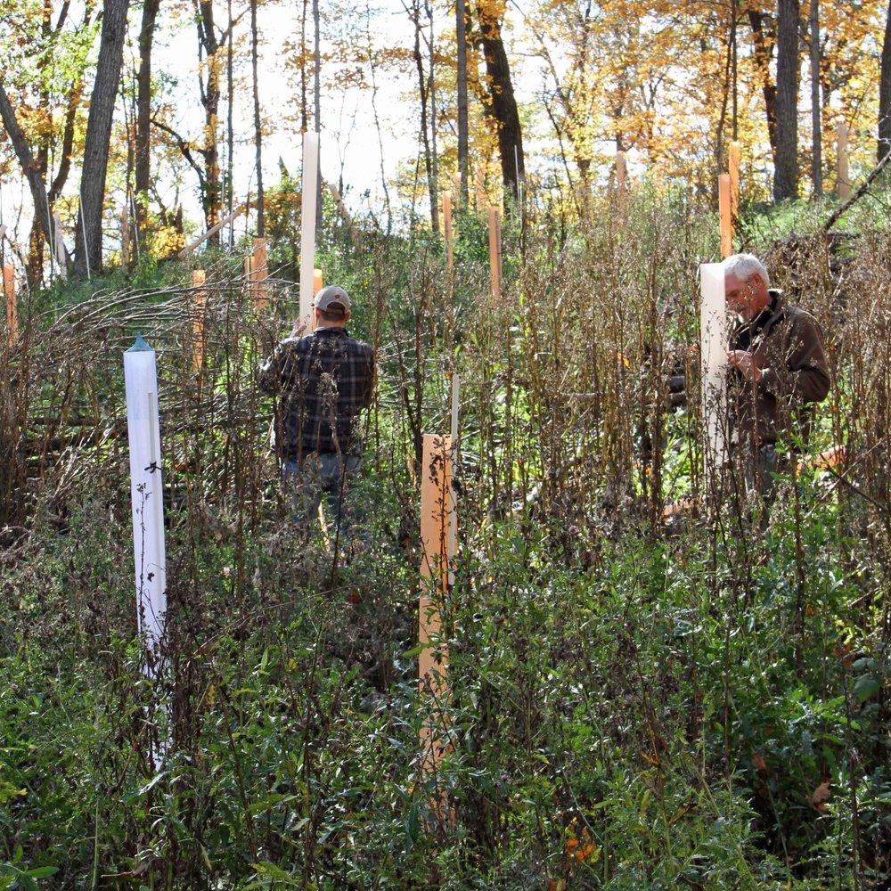 setting up tubes in oak 2013.jpg