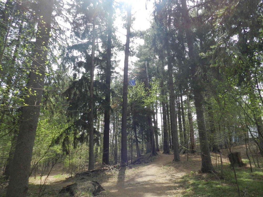 woods_spring_2013.jpg