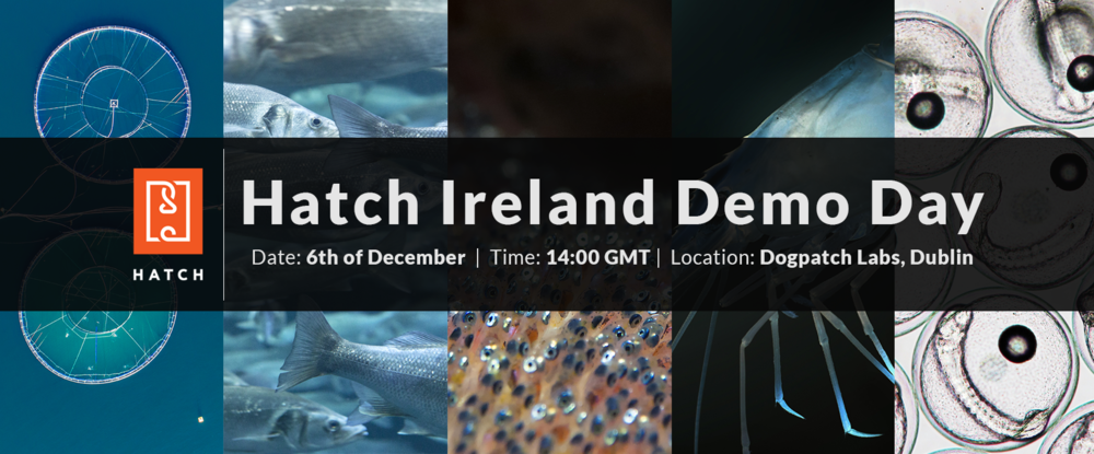 hatch_ireland_demo_day.png