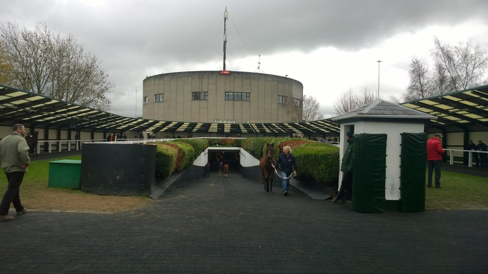 Right: The pre parade ring at Goffs where all the last minute decisions are made.