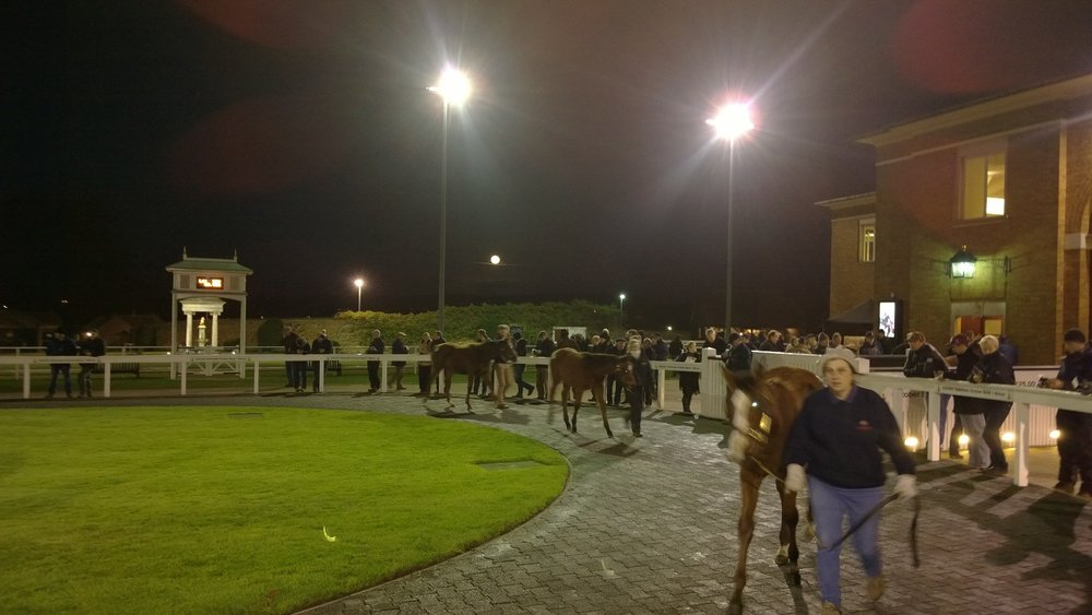 Working into the night at the pre-parade ring at Tattersalls