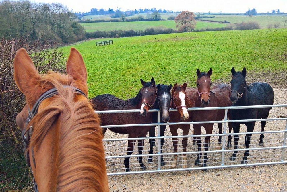 foals.jpg
