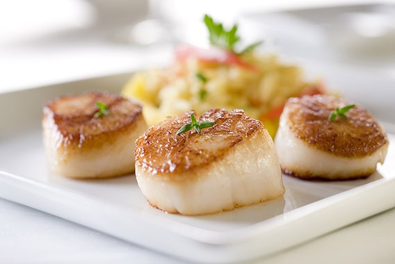 Scallop Recipes -