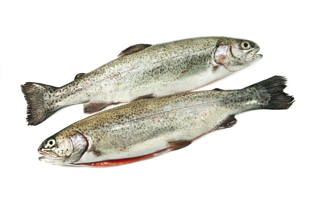 Rainbow Trout          Recipes -