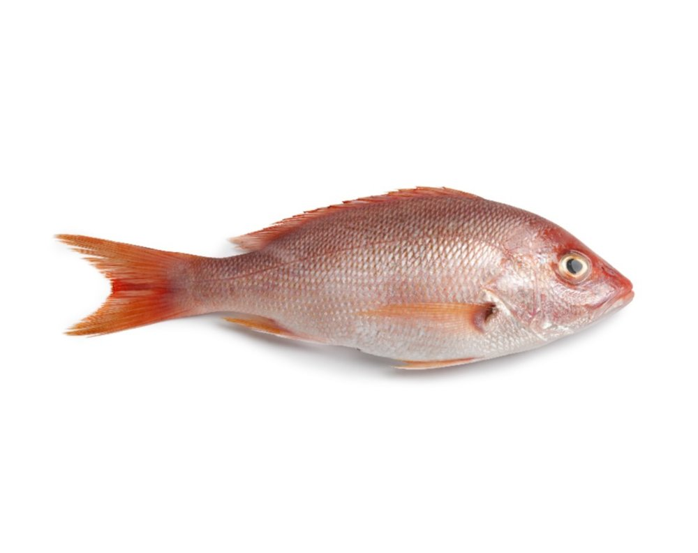 Snapper Recipes - Substitutes: Striped Bass, Tilefish, Corvina, Grouper, Rockfish